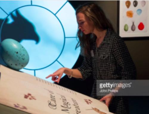 Varázslatos Harry Potter-gyűjtemény a British Library-ben